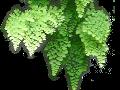 JARDINAGE : Mur végétal intérieur et extérieur