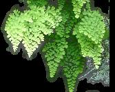MUR-VEGETAL.EU: apprendre à faire des murs végétaux