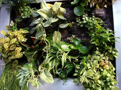 cadre végétal avec réserve d'eau et arrosage automatique