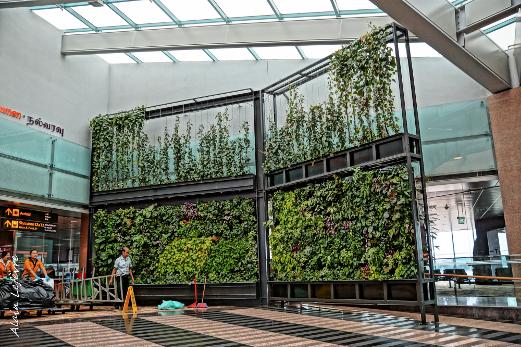mur végétal à l'aéroport de Singapour