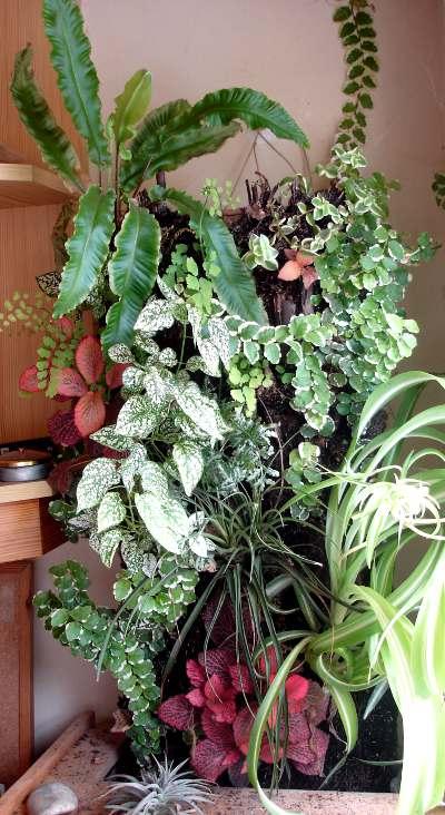 mur végétal âgé de 2 mois