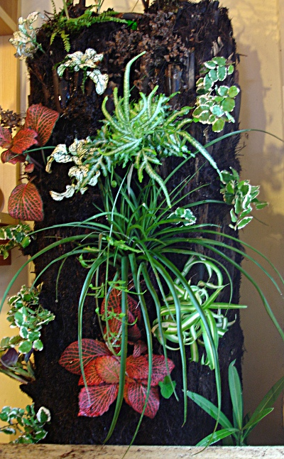 mur végétal réalisé avec un tronc de fougère