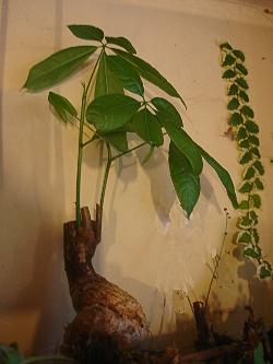 Les plantes adapt es pour un mur v g tal int rieur et for Plantes d interieures