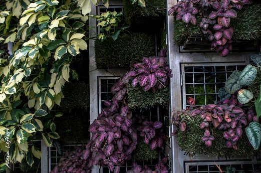 murs végétaux en intérieur à l'aéroport de Singapour
